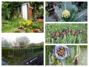 allotment collage 2