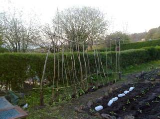 allotment earlier days 2013