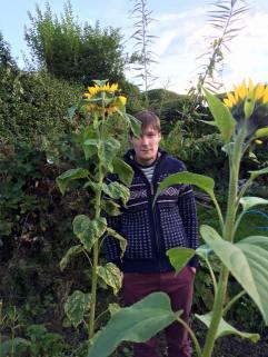 rowett and his sunflowers