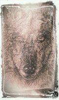 my wolf sketch april 2013