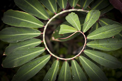 Spinning in Spiral